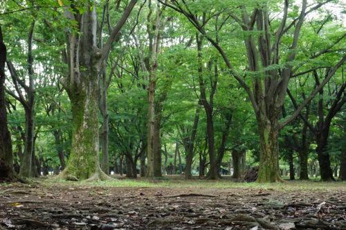 森の中の様子を撮影